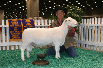 2009 National Champion White Dorper Ram