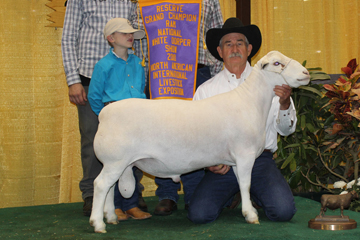2009 and 2010 National Reserve Champion White Dorper Ram