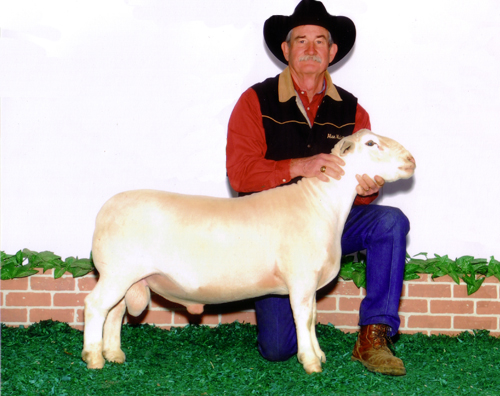 2011 Reserve National Champion Ram