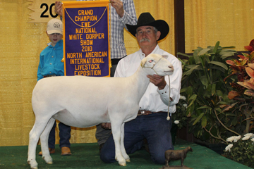 2010 National Champion White Dorper Ewe